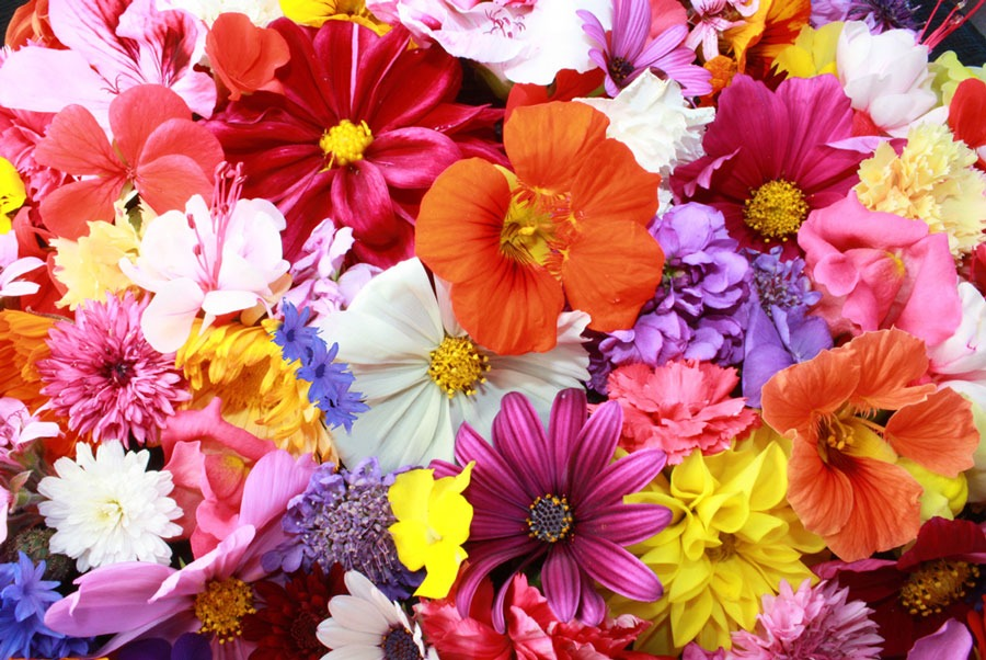 Χρώματα λουλουδιών