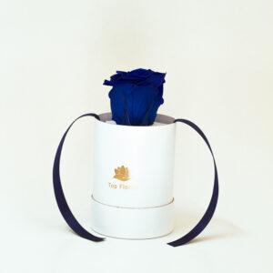 white-box-blue-forever